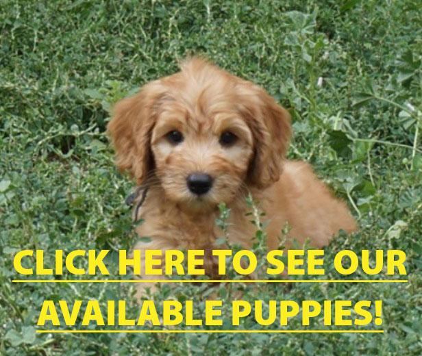 PuppyForHomePage